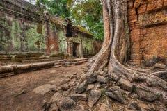 Αρχαίες καταστροφές και ρίζες δέντρων, ναός TA Prohm, Angkor, Καμπότζη Στοκ φωτογραφίες με δικαίωμα ελεύθερης χρήσης