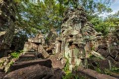Αρχαίες καταστροφές και ρίζες δέντρων, ναός TA Prohm, Angkor, Καμπότζη Στοκ Εικόνα