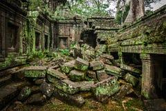 Αρχαίες καταστροφές του ναού TA Prohm, Angkor, Καμπότζη Στοκ Φωτογραφίες