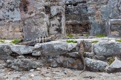 Αρχαίες των Μάγια καταστροφές σε Tulum, Quintana Roo Στοκ Εικόνα