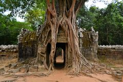 Αρχαίος ναός εποχής Angkor που εισβάλλεται από τα δέντρα Στοκ Εικόνες