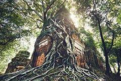 Αρχαίος ναός κάτω από τις ρίζες του δέντρου Στοκ φωτογραφίες με δικαίωμα ελεύθερης χρήσης