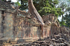Αρχαίος ναός Angkor Wat Καμπότζη TA Prohm Στοκ φωτογραφίες με δικαίωμα ελεύθερης χρήσης