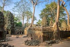 Αρχαίος ναός TA Prohm σε Angkor Wat σύνθετο Στοκ Φωτογραφίες