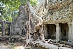 Αρχαίος ναός TA Prohm Angkor Wat Καμπότζη Στοκ φωτογραφίες με δικαίωμα ελεύθερης χρήσης