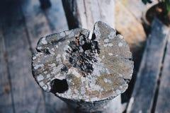 Αρχαίος πυρήνας Στοκ Φωτογραφία