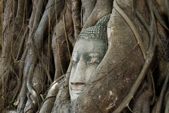 Αρχαίο άγαλμα του Βούδα σε Ayutthaya Στοκ φωτογραφίες με δικαίωμα ελεύθερης χρήσης