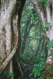 Αρχαίο δέντρο σε ένα δάσος Στοκ φωτογραφίες με δικαίωμα ελεύθερης χρήσης