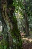 Αρχαίο δέντρο Στοκ φωτογραφία με δικαίωμα ελεύθερης χρήσης