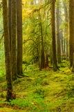Αρχαίο ίχνος φύσης αλσών στο ολυμπιακό εθνικό πάρκο, Ουάσιγκτον, Ηνωμένες Πολιτείες στοκ φωτογραφία