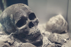 Αρχαίο ανθρώπινο κρανίο στο μαλακό φως στοκ φωτογραφίες