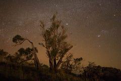 Αρχαίο αστέρι Scape δέντρων Στοκ Εικόνες