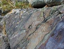 αρχαίο διάνυσμα θέματος βράχου εικονογραμμάτων ζωγραφικής απεικόνισης μορφής Petroglyphs pisanitsa του Τομσκ Στοκ Φωτογραφία
