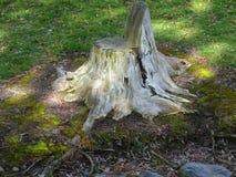 Αρχαίο κολόβωμα δέντρων ως κάθισμα κήπων Στοκ εικόνα με δικαίωμα ελεύθερης χρήσης
