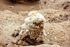 Αρχαίο νεκροταφείο Chauchilla στο Περού, μούμια μωρών Στοκ Εικόνες