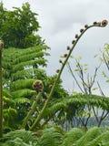 αρχαίο φυτό Στοκ Φωτογραφίες