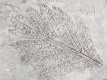 Αρχαίο φύλλο Στοκ φωτογραφία με δικαίωμα ελεύθερης χρήσης