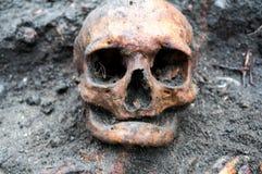 Αρχαιολογική ανασκαφή με το κρανίο ακόμα που θάβεται κατά το ήμισυ στο έδαφος Στοκ Εικόνα