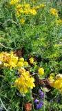 Αρχειοθετημένη με τα κίτρινα λουλούδια Στοκ Φωτογραφία