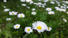 Αρχειοθετημένη με τα λουλούδια Στοκ φωτογραφία με δικαίωμα ελεύθερης χρήσης