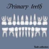 Αρχικά δόντια διανυσματική απεικόνιση