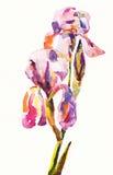 Αρχική έγχρωμη εικονογράφηση του λουλουδιού μέσα Στοκ εικόνα με δικαίωμα ελεύθερης χρήσης