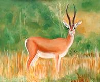 Αρχική ζωγραφική του Gazelle ενός όμορφου αρσενικού Thomson Στοκ Εικόνες