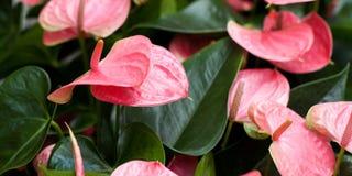 Αρχική φωτεινή ανθοδέσμη των ρόδινων λουλουδιών Στοκ φωτογραφίες με δικαίωμα ελεύθερης χρήσης