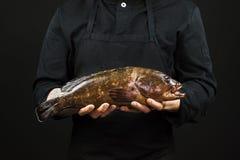 Αρχιμάγειρας που κρατά ένα μεγάλο ψάρι στα χέρια του στο μαύρο υπόβαθρο στοκ εικόνες