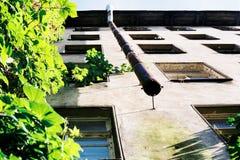 αρχιτεκτονική Βαρκελώνη που χτίζει το σύγχρονο κατοικημένο ύφος της Ισπανίας Στοκ Φωτογραφία