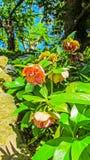 Αρχιτεκτονικός κήπος στοκ φωτογραφίες με δικαίωμα ελεύθερης χρήσης