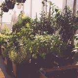 Αρωματικός αστικός κήπος στεγών Στοκ εικόνα με δικαίωμα ελεύθερης χρήσης