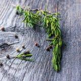 αρωματικό απομονωμένο κλάδος λευκό δεντρολιβάνου φυτών Στοκ Φωτογραφίες