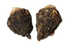 Αρωματισμένος ginseng και macae Maca στοκ εικόνα με δικαίωμα ελεύθερης χρήσης