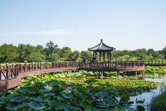 Ασία Κίνα, Πεκίνο, παλαιό θερινό παλάτι, λίμνη λωτού, ξύλινη γέφυρα, ξύλινο περίπτερο Στοκ εικόνα με δικαίωμα ελεύθερης χρήσης