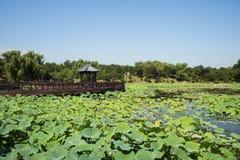 Ασία Κίνα, Πεκίνο, παλαιό θερινό παλάτι, λίμνη λωτού, ξύλινο περίπτερο γεφυρών Στοκ Εικόνα