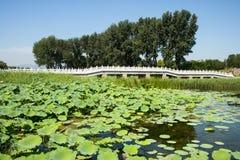 Ασία Κίνα, Πεκίνο, παλαιό θερινό παλάτι, λίμνη λωτού φθινοπώρου, γέφυρα πετρών Στοκ φωτογραφία με δικαίωμα ελεύθερης χρήσης