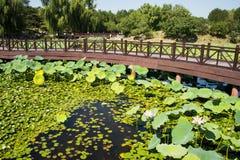 Ασία Κίνα, Πεκίνο, παλαιό θερινό παλάτι, λίμνη λωτού φθινοπώρου, η ξύλινη γέφυρα Στοκ Φωτογραφίες