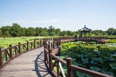 Ασία Κίνα, Πεκίνο, παλαιό θερινό παλάτι, λίμνη λωτού φθινοπώρου, ξύλινο περίπτερο, ξύλινη γέφυρα Στοκ φωτογραφία με δικαίωμα ελεύθερης χρήσης