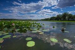 Ασία Κίνα, Πεκίνο, παλαιό θερινό παλάτι, λίμνη λωτού Στοκ Εικόνες