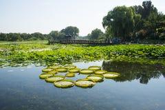Ασία Κίνα, Πεκίνο, παλαιό θερινό παλάτι, τοπίο κήπων, λίμνη Lotus και γέφυρα περίπτερων Στοκ Φωτογραφία