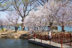 Ασία Κίνα, Πεκίνο, το θερινό παλάτι, δύση Dykeï ¼ ŒSpring sceneryï ¼ Œ Στοκ φωτογραφία με δικαίωμα ελεύθερης χρήσης