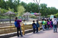 Ασία Κίνα, Πεκίνο, Daxing, πάρκο άγριων ζώων, πάρκο Landscapeï ¼ Œ Στοκ Φωτογραφία