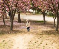 Ασία κινέζικα, Πεκίνο, πάρκο Yuyuantan, ο κήπος λουλουδιών, κεράσι, Στοκ Εικόνες