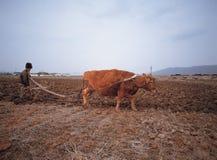 Ασία στοκ φωτογραφίες με δικαίωμα ελεύθερης χρήσης