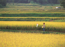 Ασία στοκ φωτογραφία με δικαίωμα ελεύθερης χρήσης
