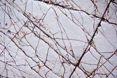 ασβεστόλιθος Στοκ εικόνα με δικαίωμα ελεύθερης χρήσης