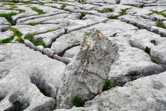 Ασβεστόλιθος, το εθνικό πάρκο Burren, Ιρλανδία Στοκ εικόνες με δικαίωμα ελεύθερης χρήσης