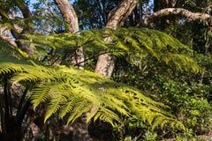 Ασημένια ανάπτυξη φτερών στο τροπικό δάσος στη Νέα Ζηλανδία Στοκ εικόνα με δικαίωμα ελεύθερης χρήσης