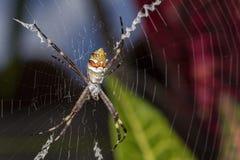Ασημένια αράχνη στενό στον επάνω Ιστού Στοκ φωτογραφία με δικαίωμα ελεύθερης χρήσης